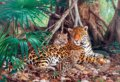 Jaguars in the jungle -