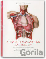 Atlas of Anatomy (Jean-Marie Le Minor) (Hardback)
