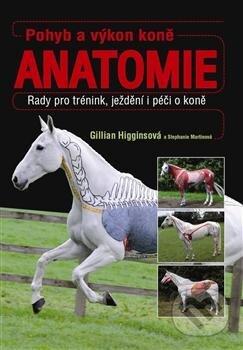 Bthestar.it Pohyb a výkon koně - Anatomie Image