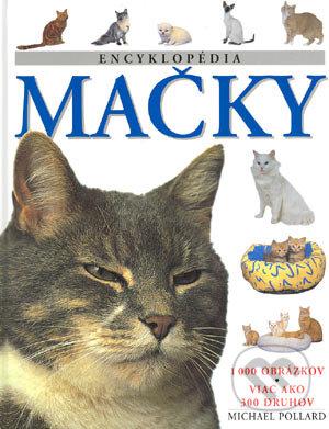 perfektný mačička obrázok