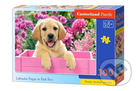 Labrador Puppy in Pink Box -