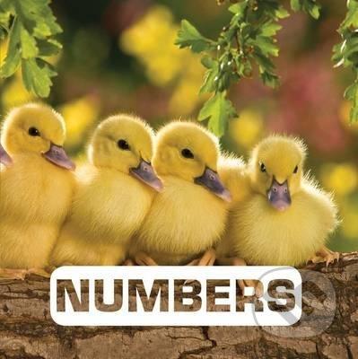 Numbers - Judith Nouvion