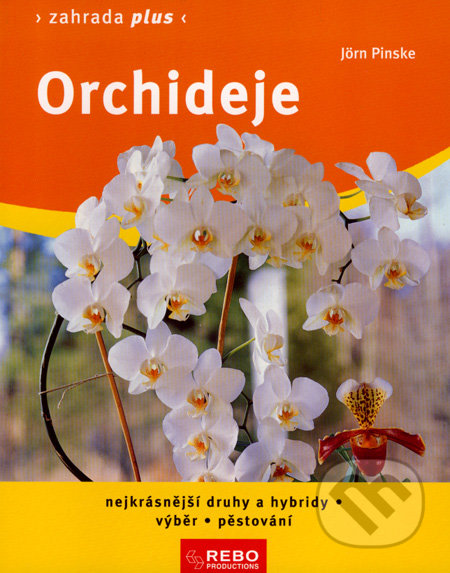Siracusalife.it Orchideje Image