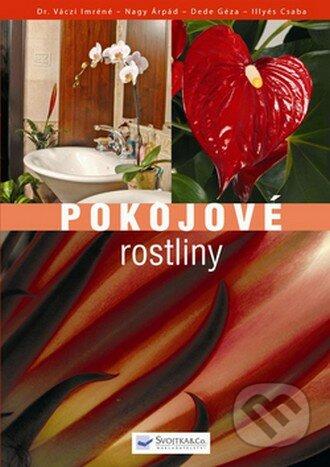 Interdrought2020.com Pokojové rostliny Image