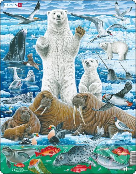 Ľadový medveď a mrož