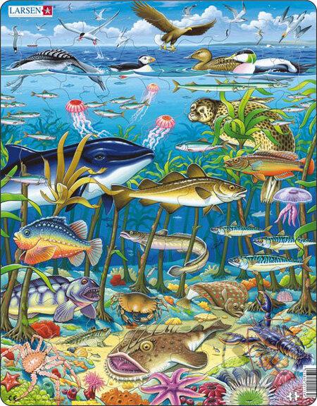 Morské riasy