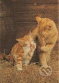 Ginger Cats -