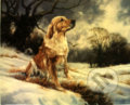 Golden Retriever In The Snow -