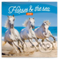 Horses and the sea 2019 -