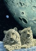 Schimmel: Lair of the Snow Leopard III -