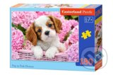 Pup in Pink Flowers -