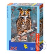 Great Horned Owl -