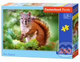 Pine Squirrel -